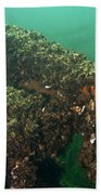 Zebra Mussels Bath Towel