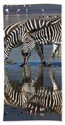 Zebras Drinking Ngorongoro Crater Tanzania Bath Towel