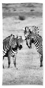 Zebras In Black And White Bath Towel