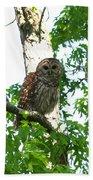 0298-001 - Barred Owl Bath Towel