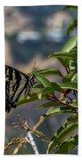0518- Butterfly Bath Towel