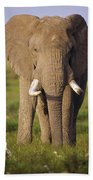African Elephant Loxodonta Africana Hand Towel