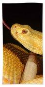 Albino Brazilian Rattlesnake Bath Towel