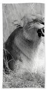 Angry Lioness Bath Towel
