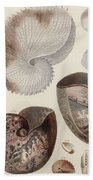 Aquatic Animals - Sea - Shells - Composition - Alien - Wall Art  - Interior Decoration  Bath Towel