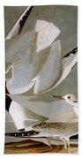 Audubon: Gull Bath Towel