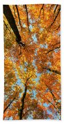 Beneath The Canopy Hand Towel