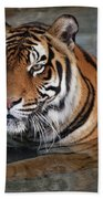 Bengal Tiger Laying In Water Hand Towel