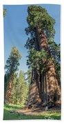 Big Tree Trail - Sequoia National Park - California Bath Towel