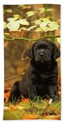 Black Labrador Retriever Puppy Bath Towel