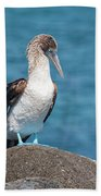 Blue-footed Booby On Rock Bath Towel