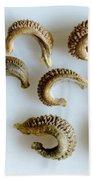 Calendula Officinalis Seeds Bath Towel