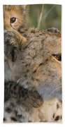 Cheetah Acinonyx Jubatus And Cub Bath Towel