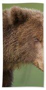Coastal Brown Bear Hand Towel