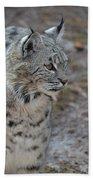 Curious Wandering Bobcat Bath Towel
