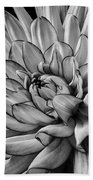 Dahlia In Black And White Close Up Bath Towel