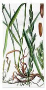 Elymus Repens, Commonly Known As Couch Grass Bath Towel