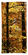 Fall Forest Hand Towel by Elena Elisseeva
