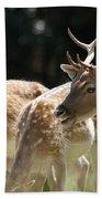 Fallow Deer Bath Towel