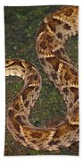 Fer-de-lance, Bothrops Asper Bath Towel