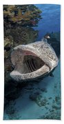 Giant Grouper, Great Barrier Reef Bath Towel