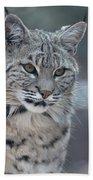 Gorgeous Bobcat's Face Up Close Bath Towel