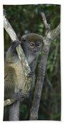 Gray Bamboo Lemur Hand Towel