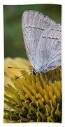 Gray Hairstreak Butterfly Bath Towel