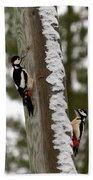 Great Spotted Woodpeckers Bath Towel