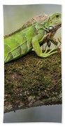 Green Iguana Iguana Iguana, Tarcoles Bath Towel