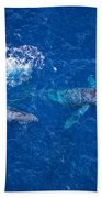Humpback Whales Aerial Bath Towel
