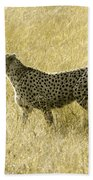 Hunting Cheetah Bath Towel