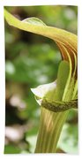 Jack-in-the-pulpit Bath Towel