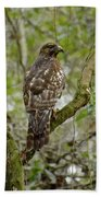 Juvenile Short-tailed Hawk Bath Towel