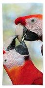 Macaws Bath Towel