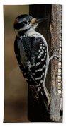Male Hairy Woodpecker Hand Towel