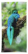 Male Quetzal Bath Towel
