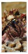 Marine Hermit Crab Bath Towel