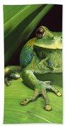 Marsupial Frog Gastrotheca Orophylax Bath Towel