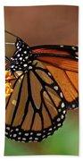 Monarch On Milkweed Bath Towel