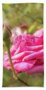 Moondrops 85 Hybrid Tea Rose, Pink Rose Originally Produced By  Bath Towel