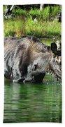 Moose In The Elk Creek Beaver Ponds Hand Towel