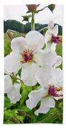 Moth Mullein Wildflowers - Verbascum Blattaria Bath Towel