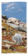 Mountain Goats On Mount Bierstadt In The Arapahoe National Forest Bath Towel