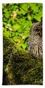 Muir Woods Owl Bath Towel