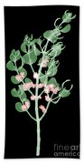 Pacific Mistletoe, Phoradendron Bath Towel