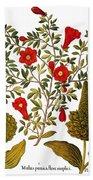 Pomegranate, 1613 Hand Towel