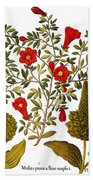 Pomegranate, 1613 Bath Towel