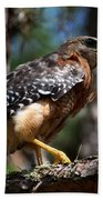 Red Shouldered Hawk Bath Towel