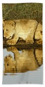 Reflected Lions Bath Towel